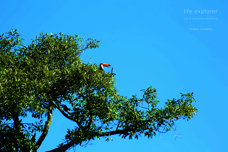"""#45 世界で最も大きな湿原地帯「パンタナール大湿原」- The World's Largest Wetland """"Pantanal"""""""