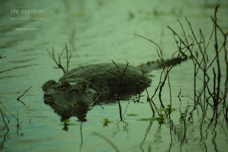 [Photo] 160414 Brazil – Pantanal