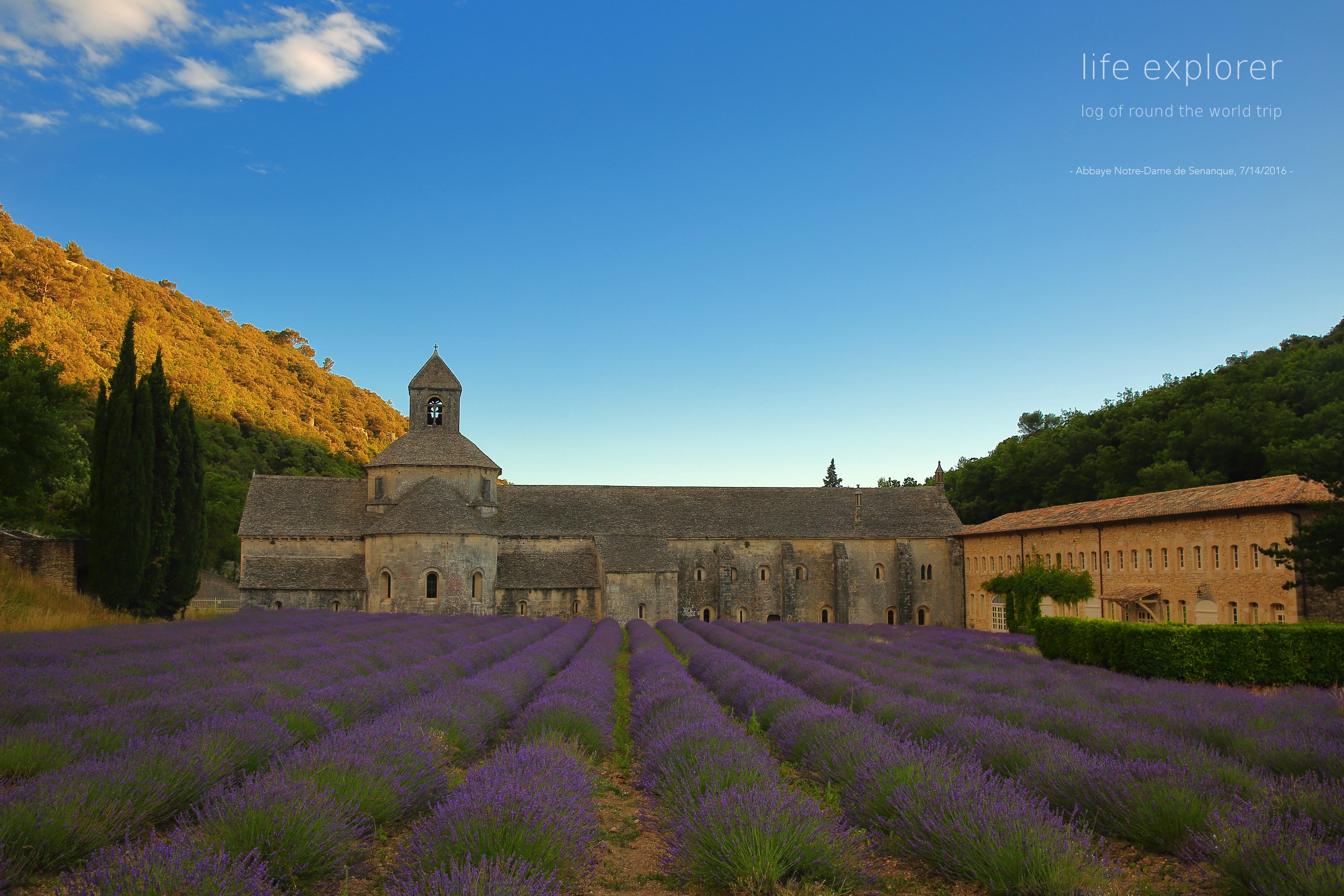 """#62 世界で最も香り高い畑 「プロヴァンスのラベンダー畑」- The World's Most Fragrant Field """"Lavender Field in Provence"""""""